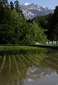 090520駒ヶ岳と魚沼コシヒカ
